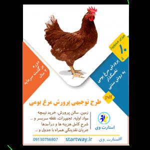 طرح توجیهی پرورش مرغ بومی تخمگذار